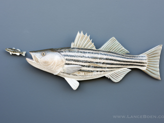 Striped Bass Sculpture hand tooled by Lance Marshall Boen. This unique fish art is inspired by Lance's passion for fly fishing. His works of art vary from larger than life leather fish sculptures to an Eagle made from vintage baseball gloves with a wingspan of nearly 12 feet.